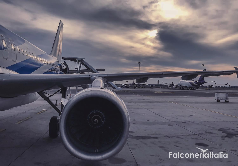 Bird control falconeria allontanamento volatili piste aeroporti
