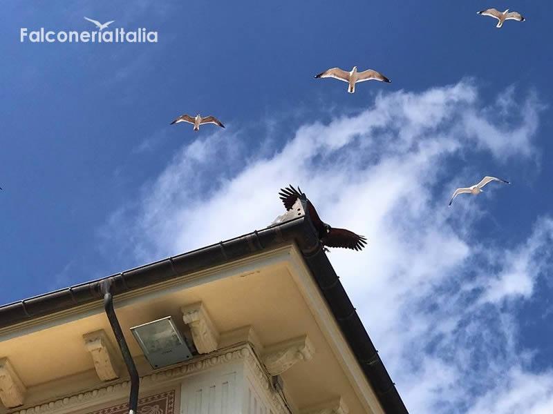 Bird control bird strike allontanamento volatili