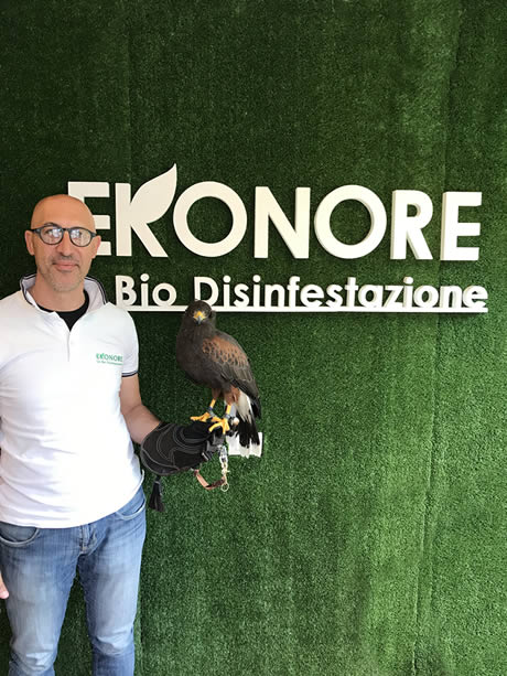 Falconieri esperti per allontanamento volatili bird control